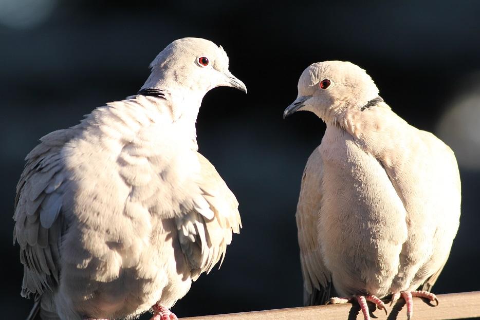Ptaki_sierpowka_01