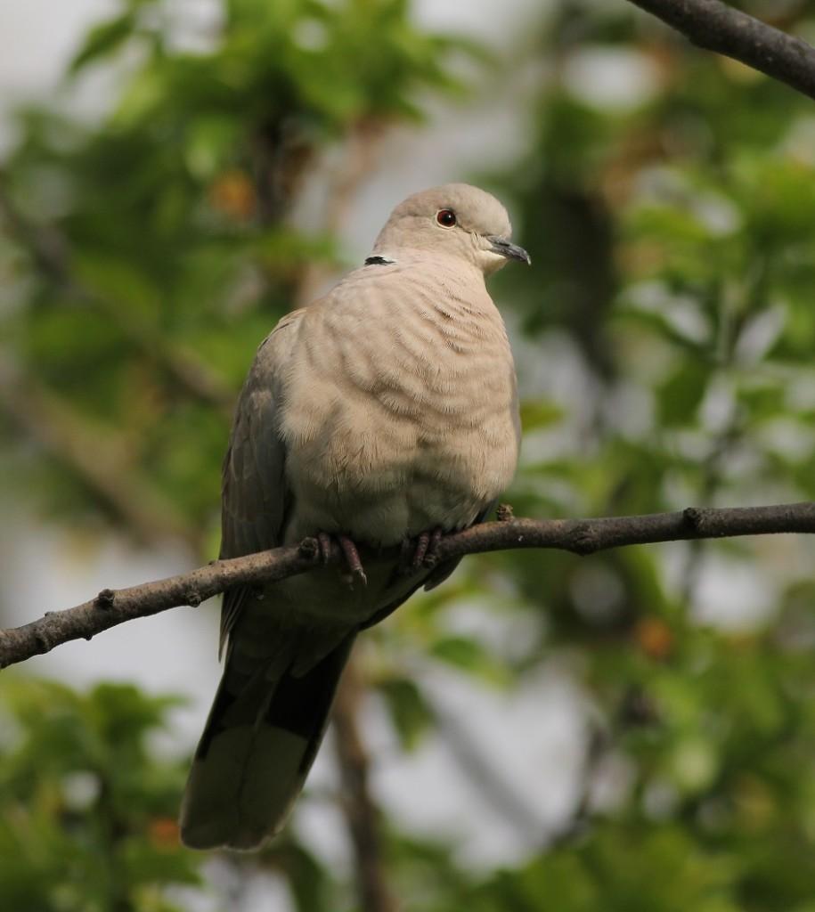 Ptaki_sierpowka_07