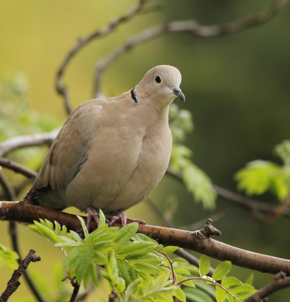 Ptaki_sierpowka_11