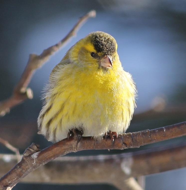 ptaki_czyz_3