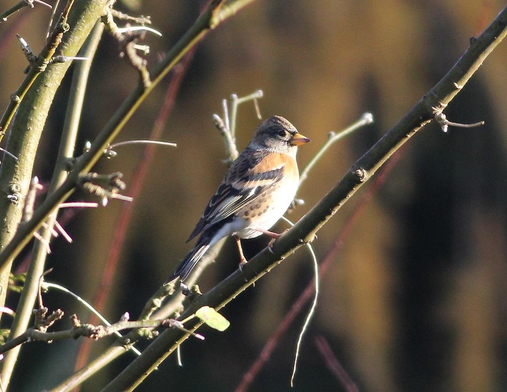 Ptaki_jer_01