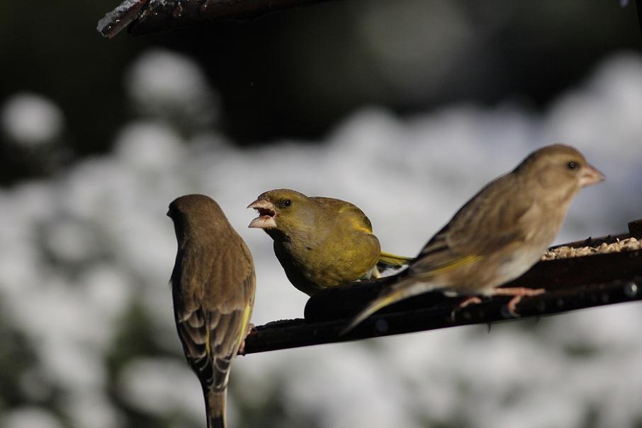 Ptaki_snieg_17