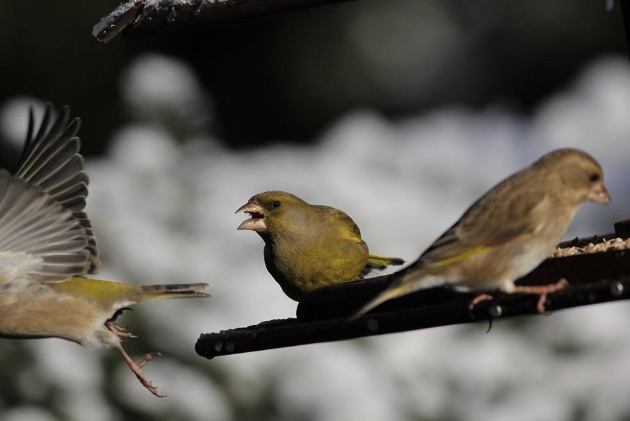 Ptaki_snieg_19