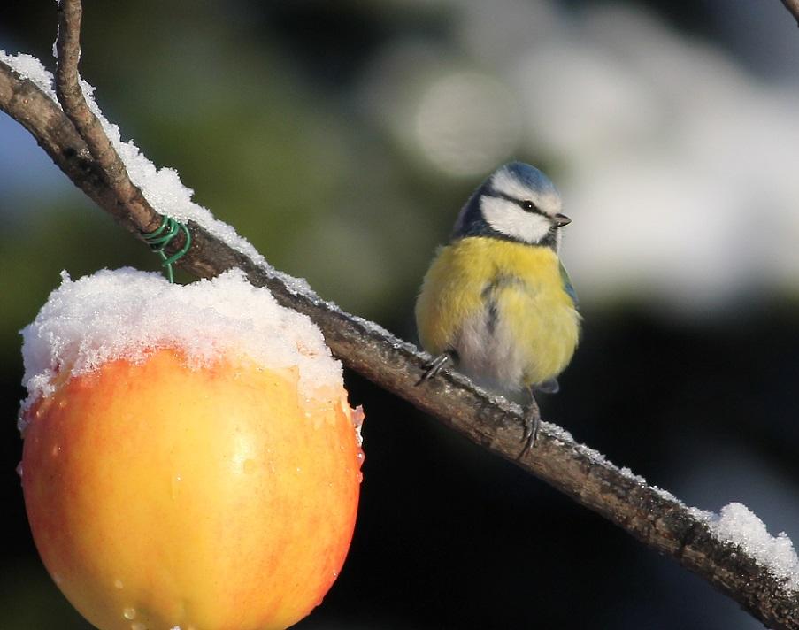 Ptaki_snieg_23