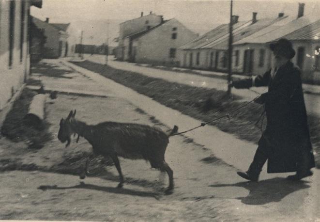 Zyd z koza