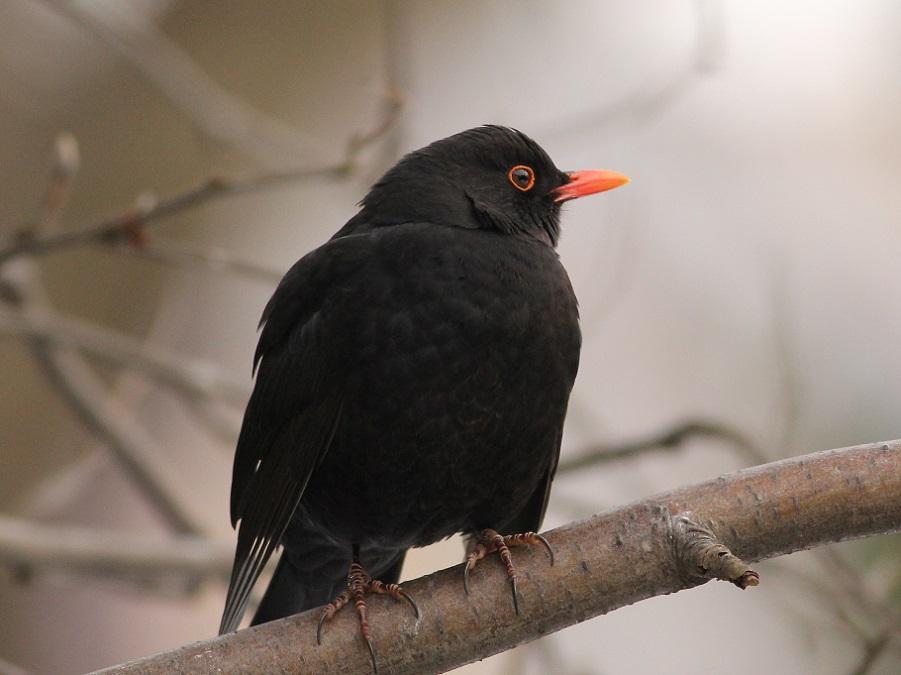Ptaki_12_kos