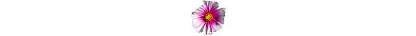 kwiatek_7b