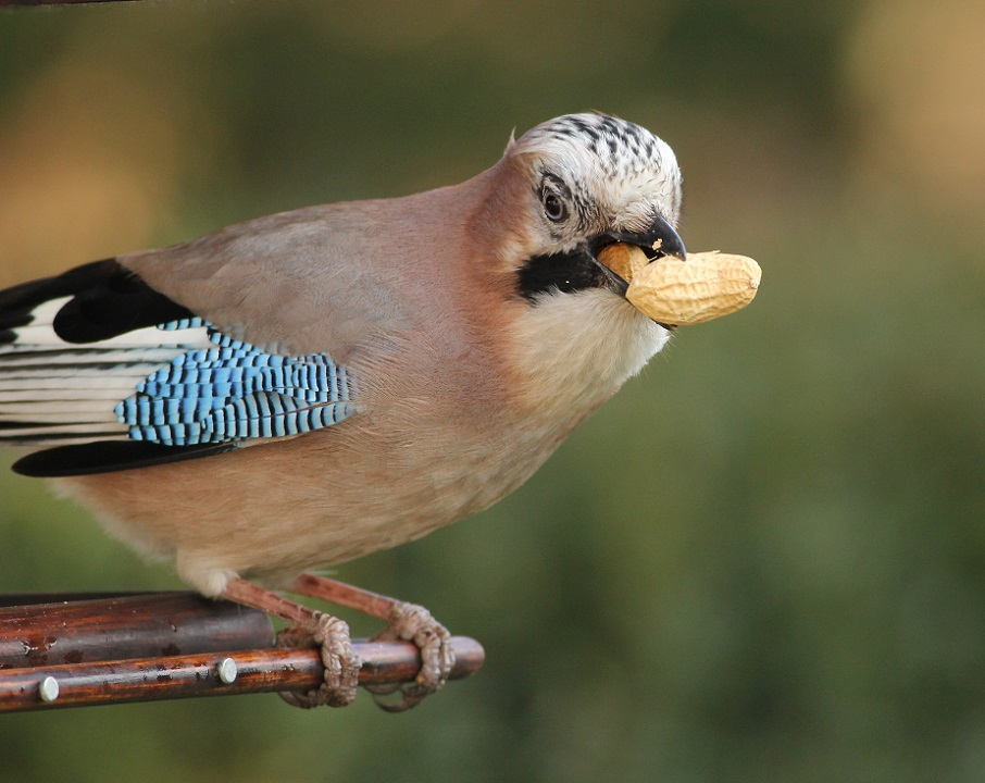 Ptaki_nietypowe_10