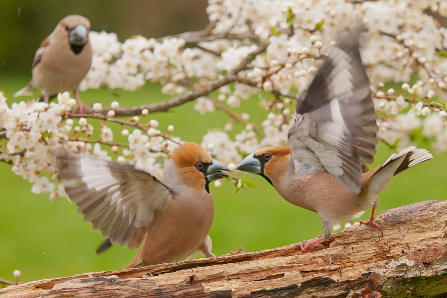 Ptaki_AS_00