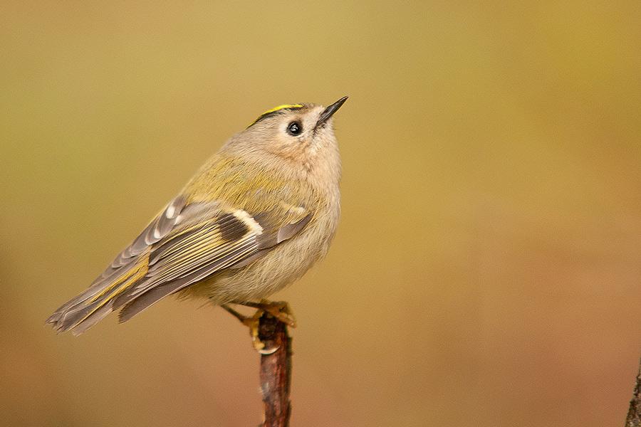 Ptaki_AS_18