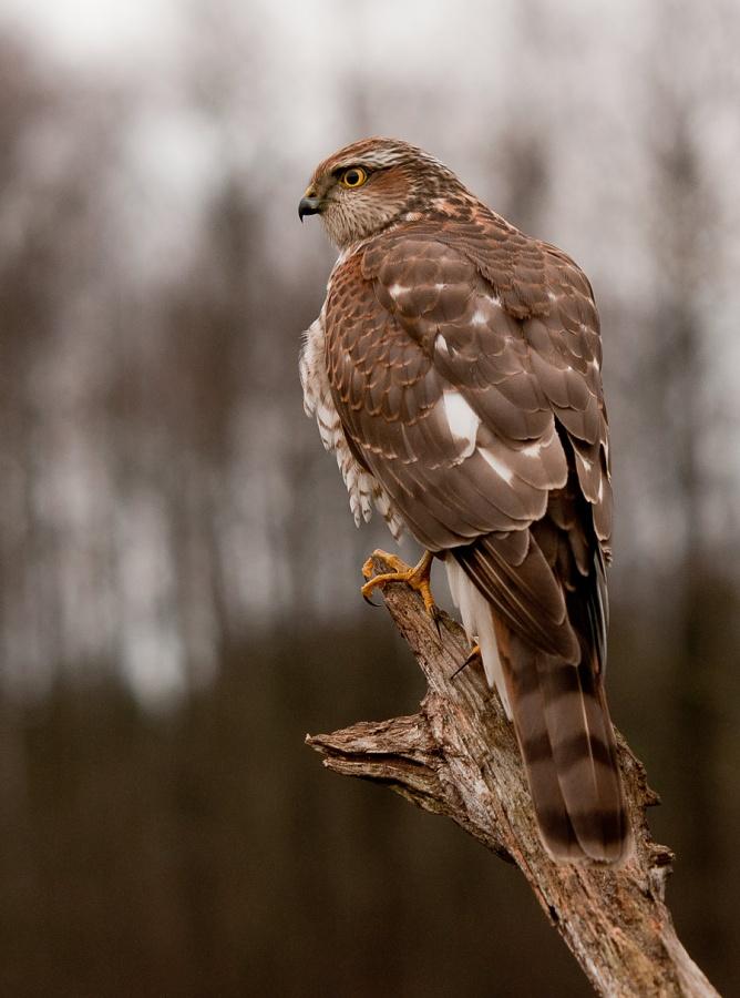 Ptaki_AS_22