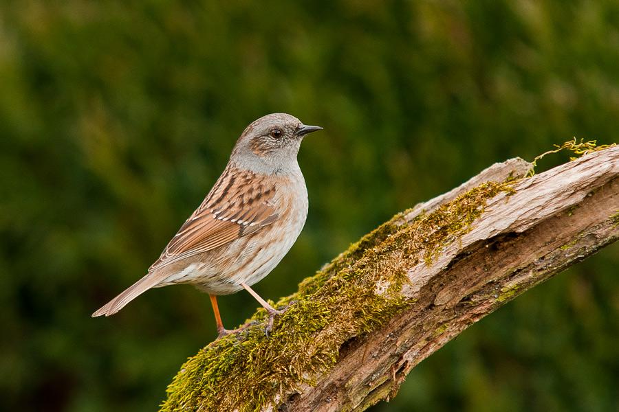 Ptaki_AS_25