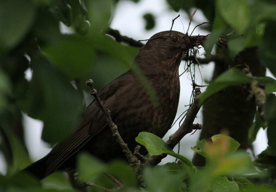 Ptaki_okres_legowy_14