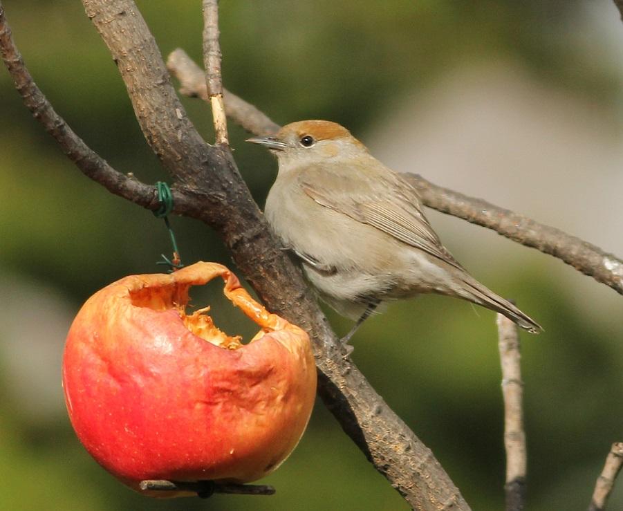 Ptaki_okres_legowy_17