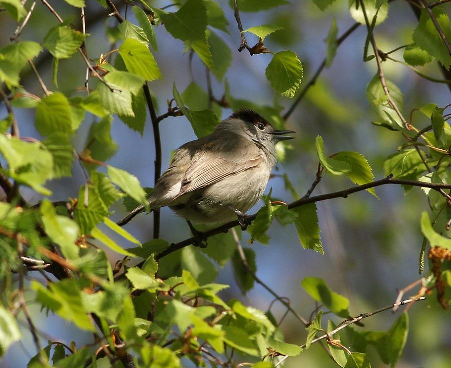 Ptaki_okres_legowy_18