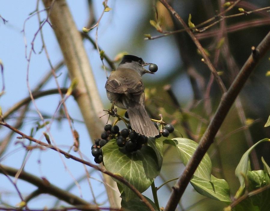 Ptaki_okres_legowy_22