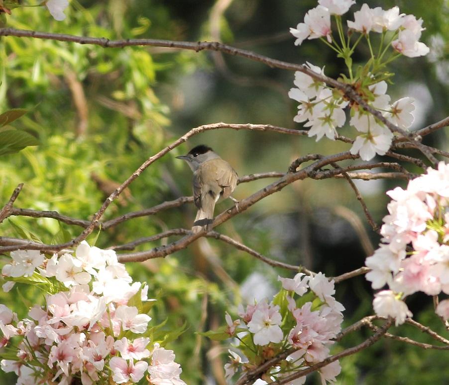 Ptaki_okres_legowy_23