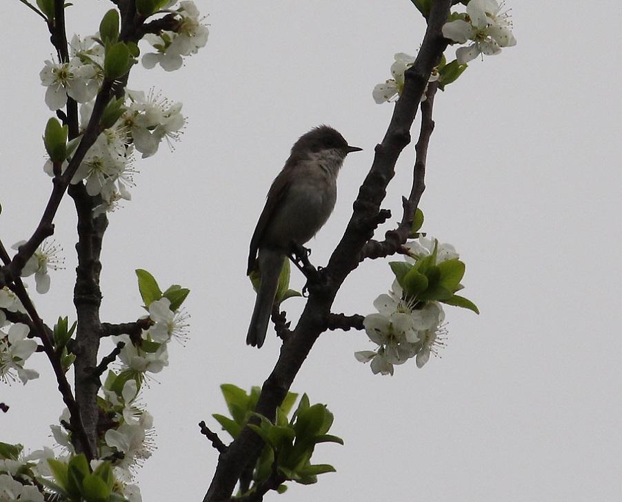 Ptaki_spiew_07