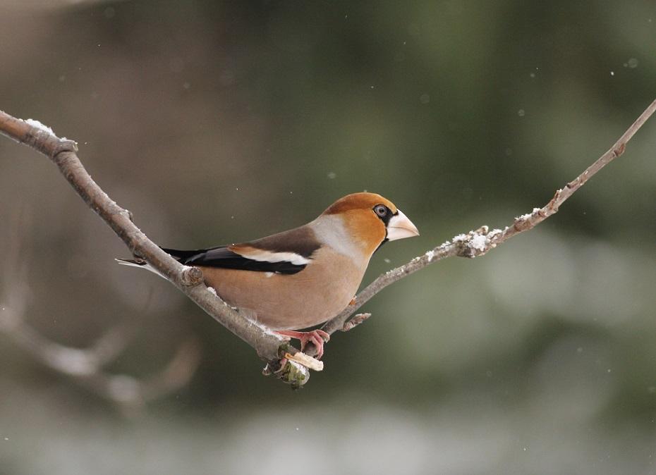 _Ptaki_11