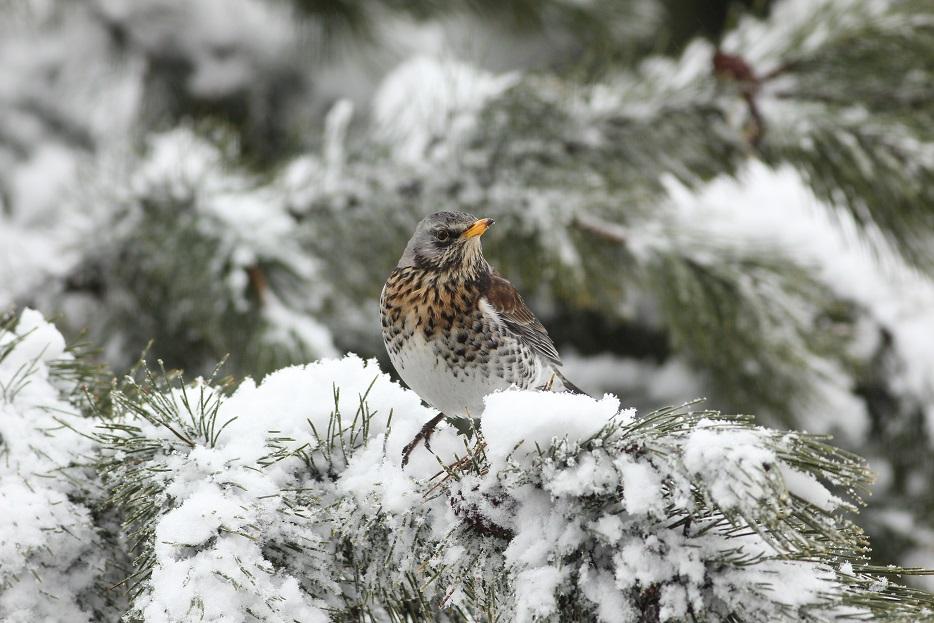 _Ptaki_24