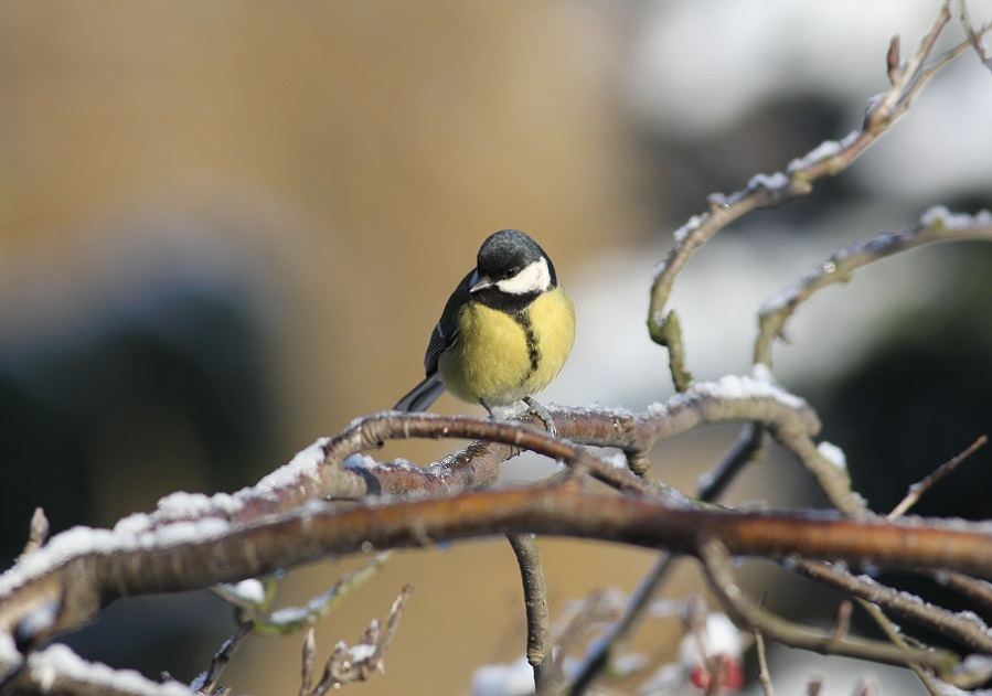 Ptaki_zimowe_02