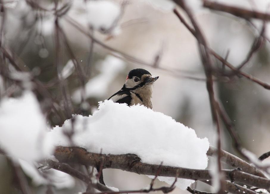 Ptaki_zimowe_04