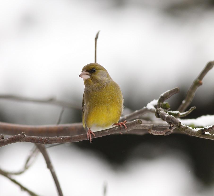 Ptaki_zimowe_05