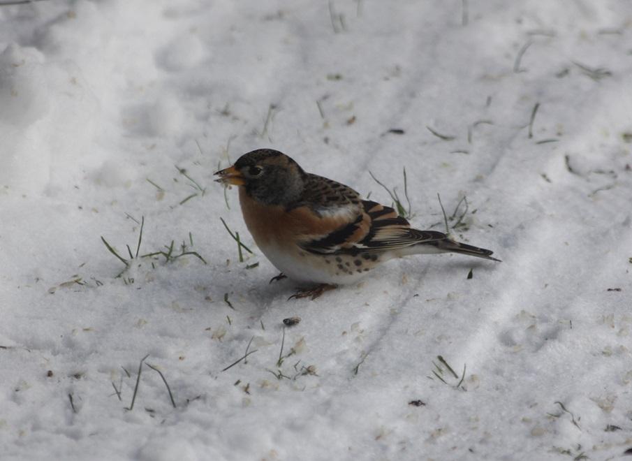 Ptaki_zimowe_07