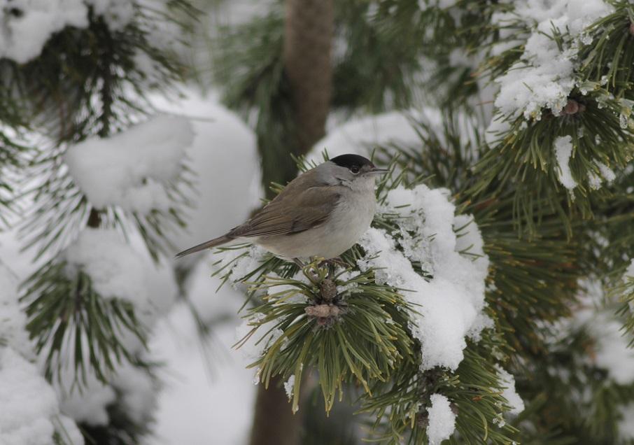 Ptaki_zimowe_08