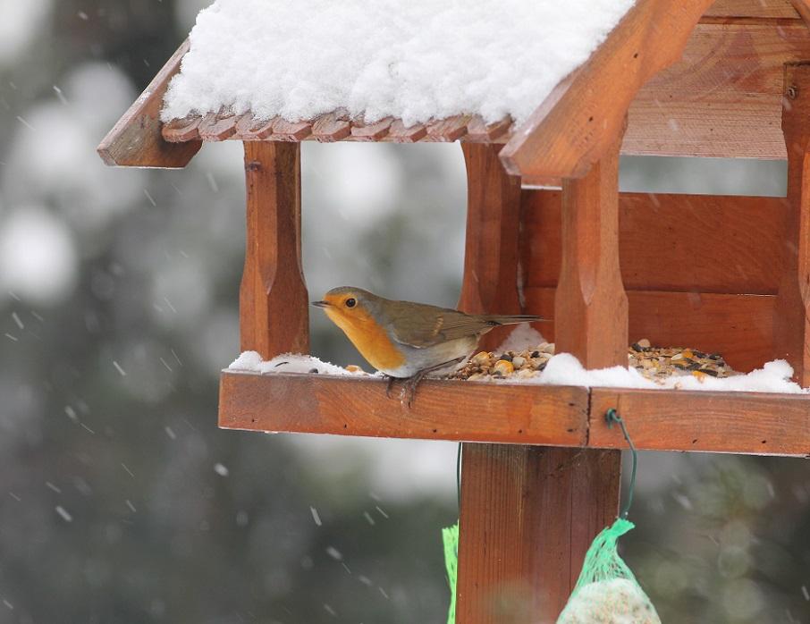 Ptaki_zimowe_18