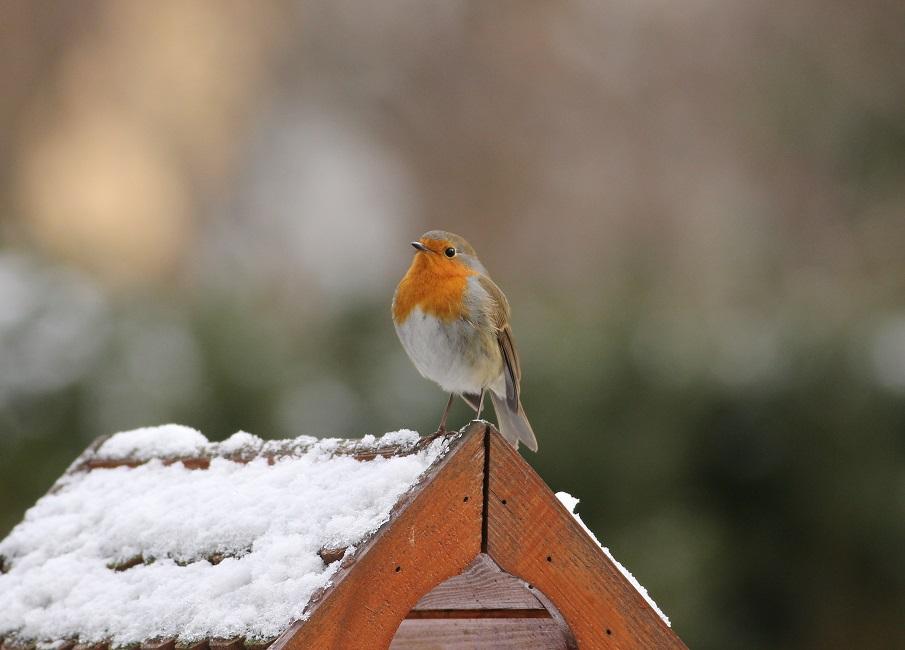 Ptaki_zimowe_19