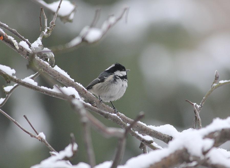 Ptaki_zimowe_20