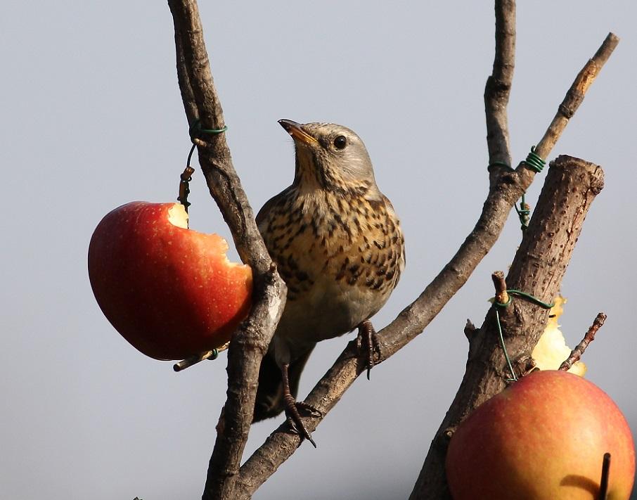 Ptaki_karmnik_02