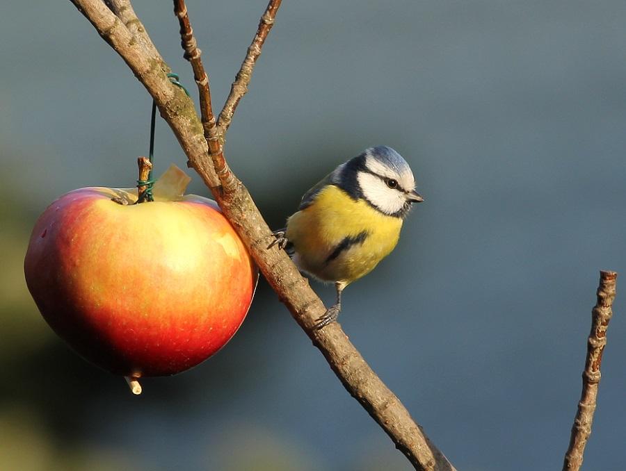 Ptaki_karmnik_10