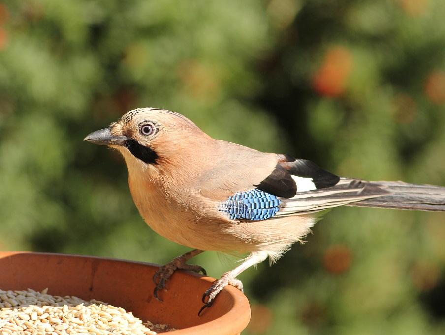 Ptaki_jesien_12