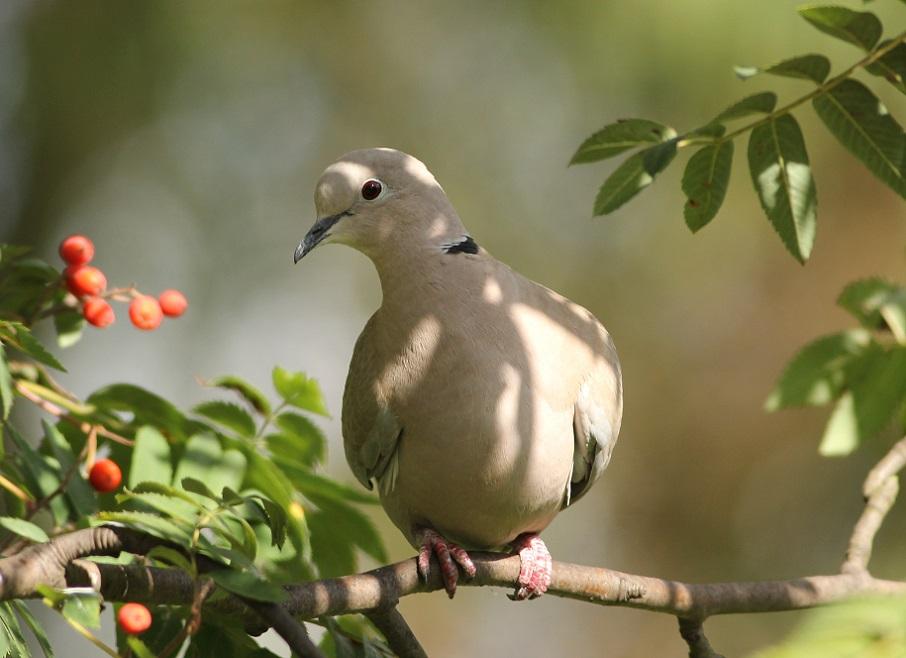 Ptaki_jesien_20