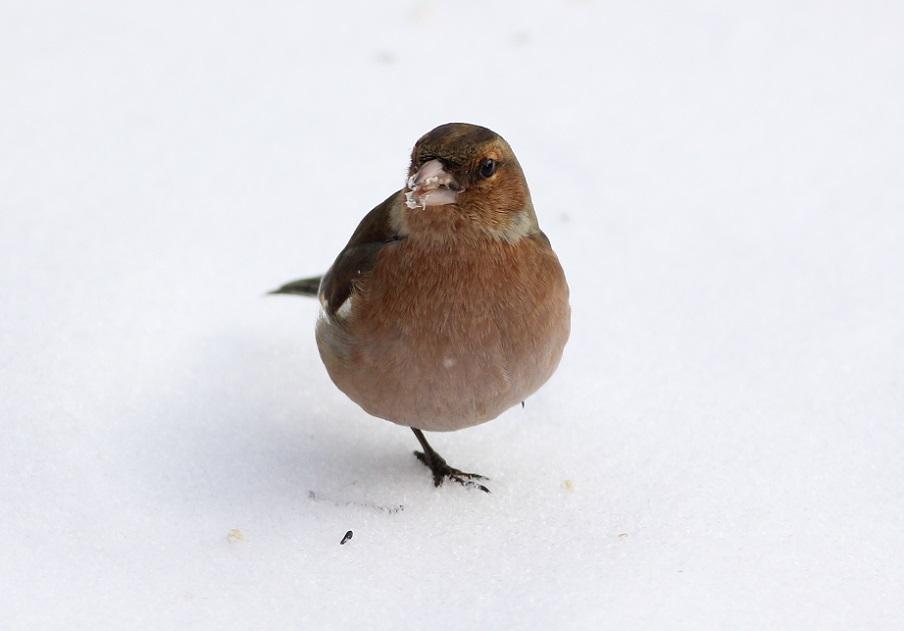 Ptaki_zimno_05