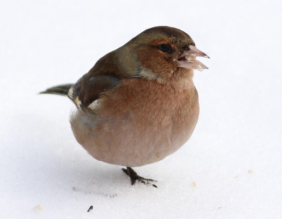 Ptaki_zimno_06