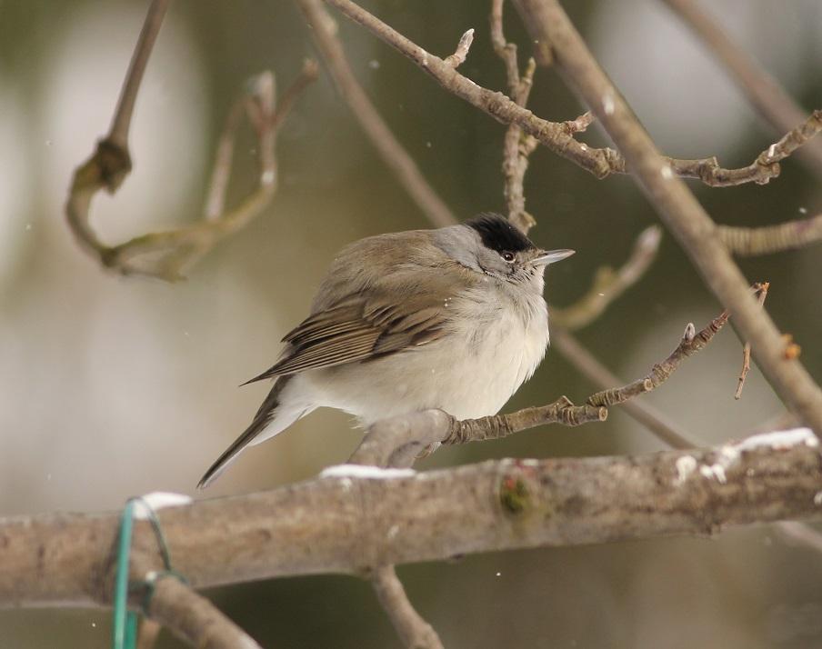 Ptaki_zimno_07