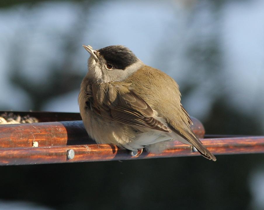 Ptaki_zimno_08