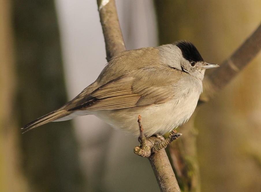 Ptaki_zimno_10