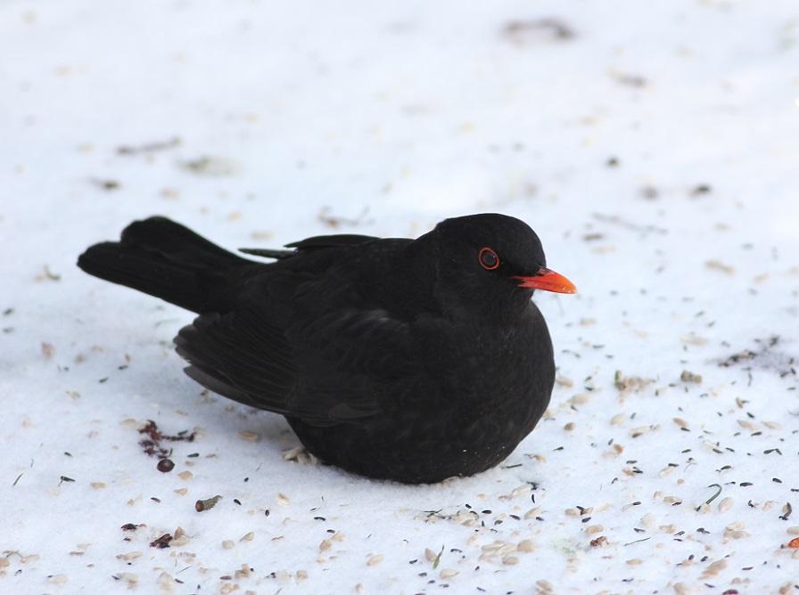 Ptaki_zimno_12