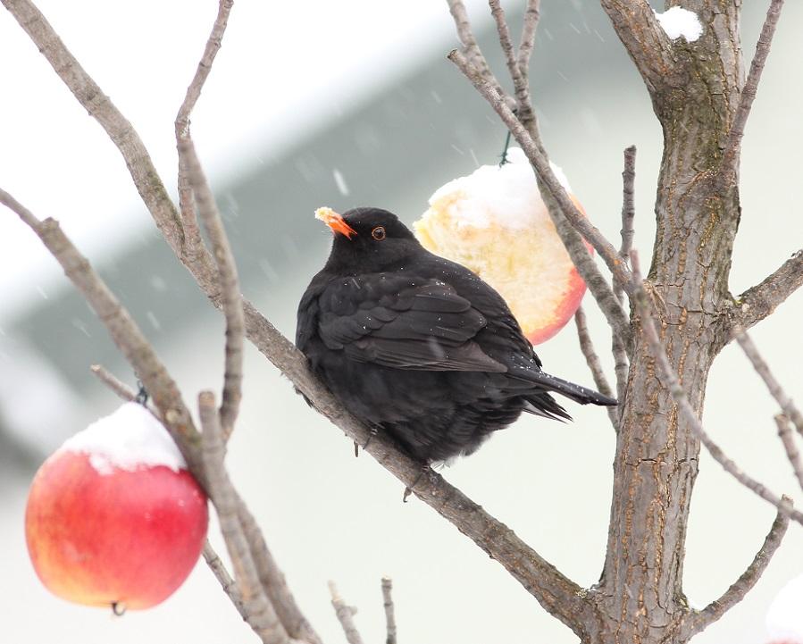 Ptaki_zimno_13
