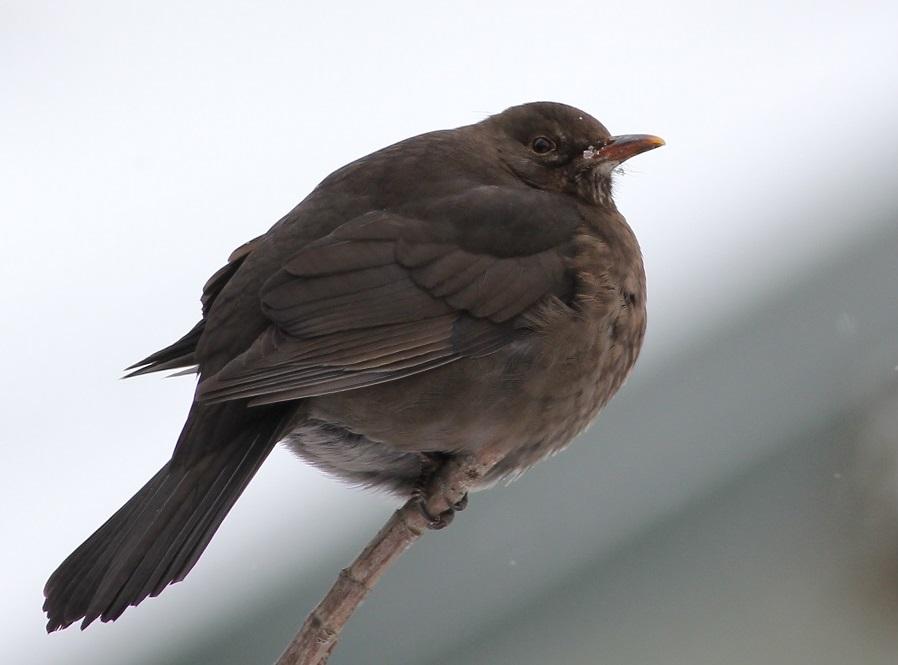 Ptaki_zimno_14