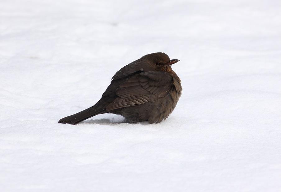 Ptaki_zimno_16