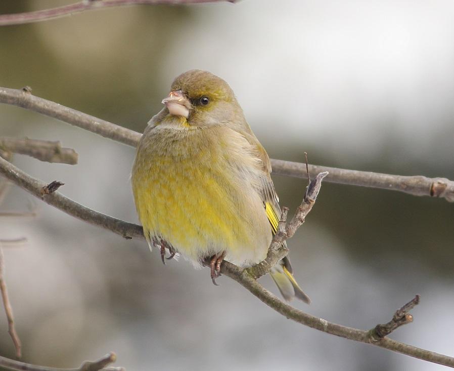 Ptaki_zimno_20