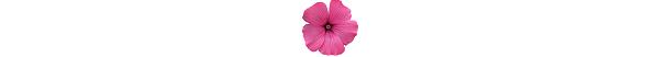 kwiatek_10b