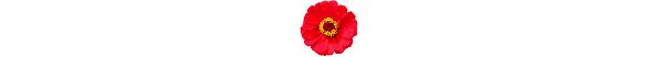 kwiatek_5b