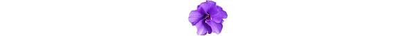 kwiatek_6b