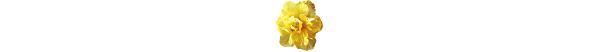 kwiatek_9b